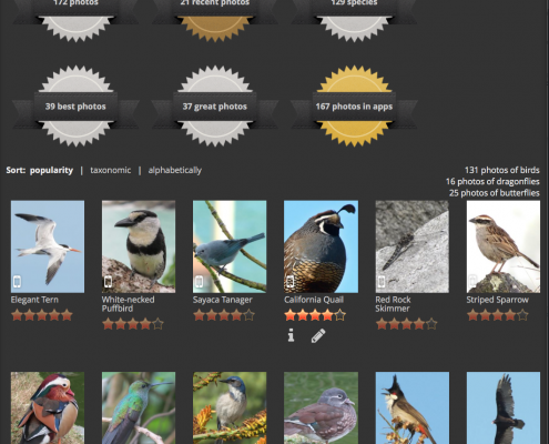 View which photos of yours appear in the apps, and how many photos of each category you've submitted.