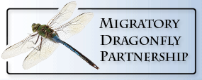 Migratory_Dragonfly_partership