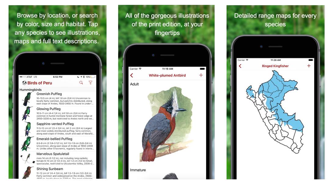 Birds of Peru Screenshots