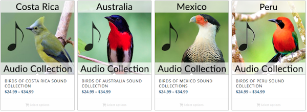BirdsEye Audio Collections